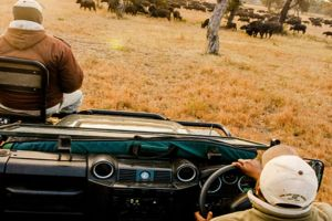 Safaris at Nyala Safari Lodge