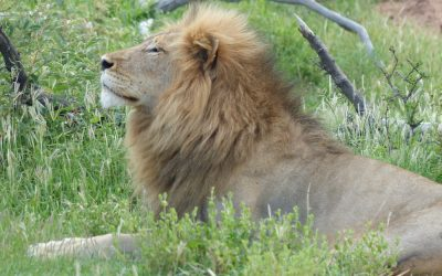 Don't beat about the bush – your Big Five safari is waiting for you!
